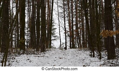 Dog running towards his owner in the forest in winter