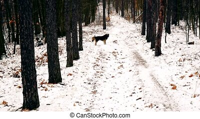 Funny dog running towards his owner in the forest in winter