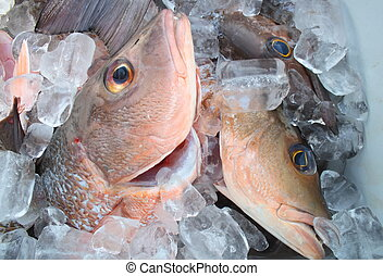 Fresh Fish - Group of fresh cubera snappers on ice