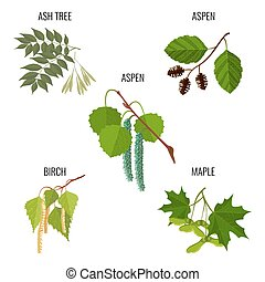 Ash tree leaves, aspen flowers, birch buds and maple keys -...