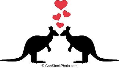 Kangaroos in love