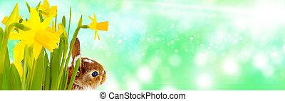 Easter bunny, Bokeh, Banner
