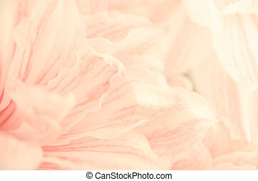 sweet lilly flower romance background