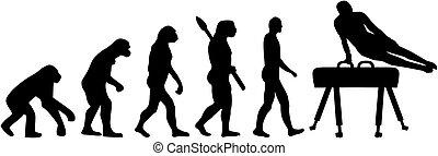 Pommel horse evolution