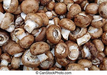Farm fresh portobello mushrooms