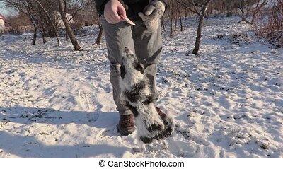 Man try feeding small dog