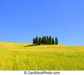 Tuscany forest 06