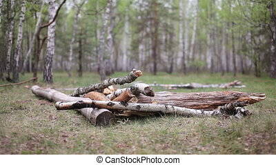 Logs are trees in the forest