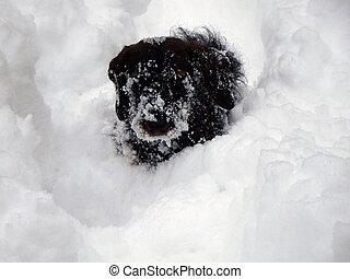 small dog and deep snow,