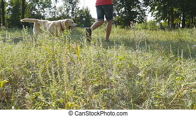 Young man and his dog breed labrador. Male owner and his...