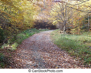 Path and colorful trees in autumn - Path and colorful trees...