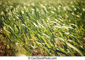 Farm field - View of a farm field in Zaragoza Province,...