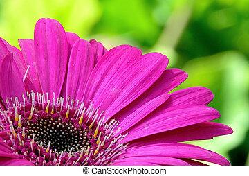 singel flower