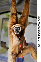 Funny furry monkey - Photos bright background funny furry...