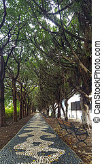 Tree-lined path with wooden bench on the ground