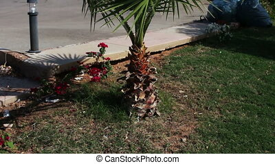 Palm tree on a city street