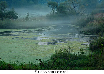Foggy Swamp - Foggy swamp in Central Russia in the late...