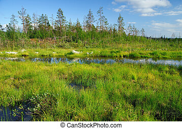 Marsh - Summer sunny day in a taiga. Marsh water
