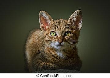 Portrait of Kitten - Portraite of Little Outbred Kitten over...