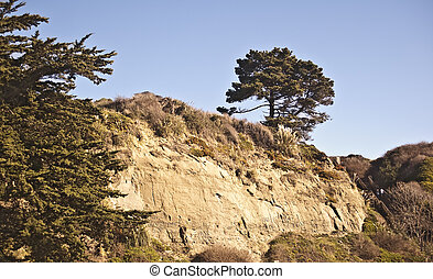 Cliffside Tree - Lone Tree on the Santa Cruz Coast