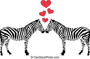 Two zebras in love with hearts