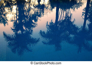 Swimming pool with palms reflection