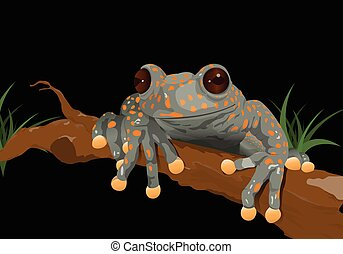 Frog (Hyloscirtus pantostictus) on black background - Vector...