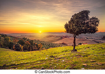 Tuscany countryside panorama and windy olive tree on sunset. Pisa, Italy
