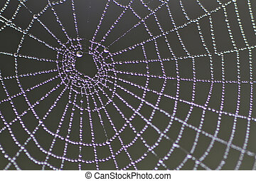 Spiders web - A spiders web with dew drops in the morning