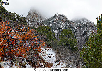 Vibrant colors of Alpine forest landscape with snow, Sandia...