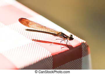 dragonfly on the table - a dragonfly on the table