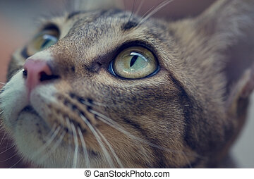 Close up of a asian cats eyes