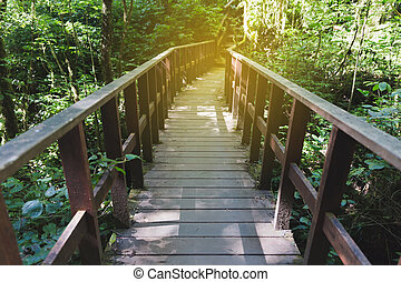 walkway in forest at Kew Mae Pan Nature Trail (Doi Inthanon...
