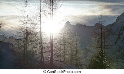Winter Sunset over Forest Trees Silhouette in Snowy Alps...
