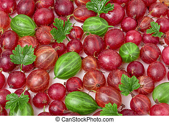 red and green gooseberries with leaves as background