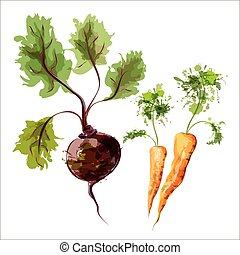 Set of vector watercolor vegetables. Beet and carrots