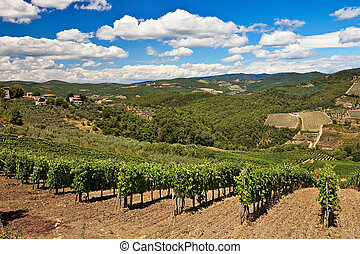 Vineyards and olive trees plantations over hills at Chianti,...