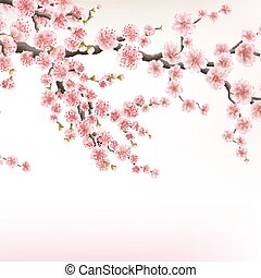 Blossom cherry tree branches. EPS 10 - Sakura template....