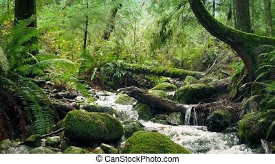 Scenic Forest River Moving Shot - Moving slowly past river...