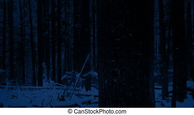 Passing Tree In Snowy Forest At Night