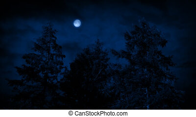 Moon And Trees On Windy Night - Big trees at night sway in...