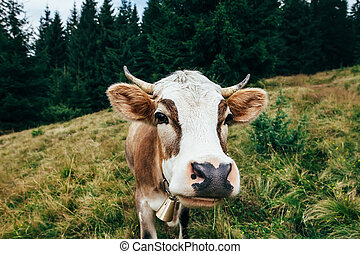 Funny cow on a meadow in forest. Animal background