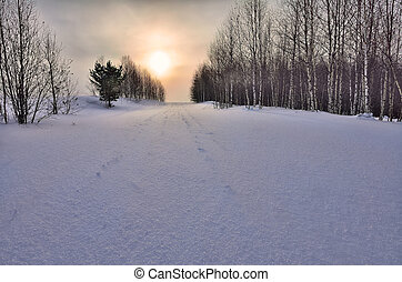 Winter snowy landscape at sunset