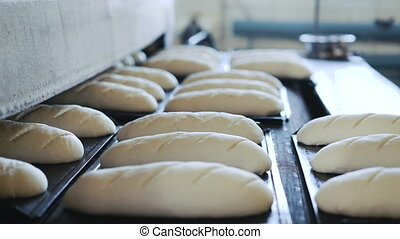 Preparing dough for baking breads