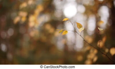 The leaves on the trees swaying in the autumn forest.