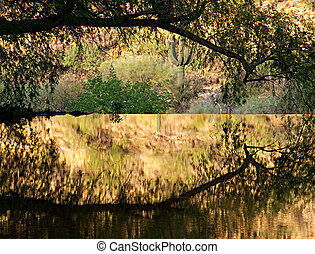 An arching cottonwood branch reflect in golden, mirror-like...