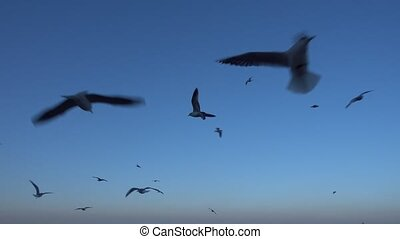 Group of wild seagulls flying erratically