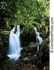 Waterfalls of Bwindi forest 2 - Wateralls of Bwindi forest...