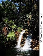 Waterfalls of Bwindi forest. 3 - Wateralls of Bwindi forest....