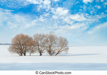 snow-covered field and trees in the snow on a background of...